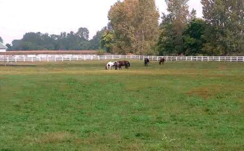 Pasture for outdoor boarded horses